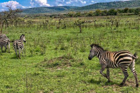 how to travel to rwanda from Nigeria, Travel bloggers in Africa, Travel blogs in South Africa, travel bloggers in South Africa ,good travel blogs in Africa, how safe is it to travel to rwanda, How much does it cost to travel to Rwanda, How much do I need to travel to Rwanda,