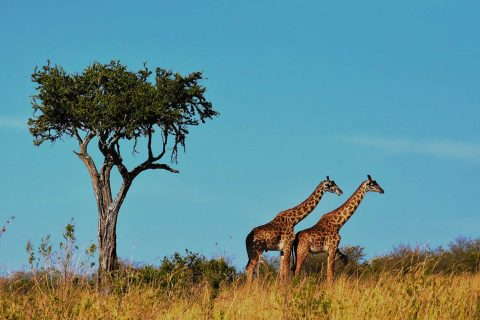 tanzania-tourism-the-fisayo-travel-blogger