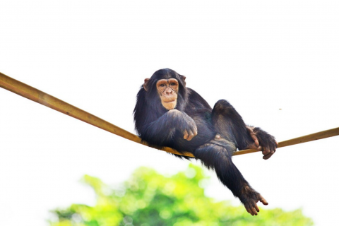Murchison falls National Park, Lake Nile, river Nile, source of the Nile, thefisayo, travel blogger, Nigerian travel blogger, , African travel blogger, west African travel blogger, Travel Blogger in Africa. chobe safari lodge, safari lodge, Budongo, chimpanzee trekking, chimpanzee